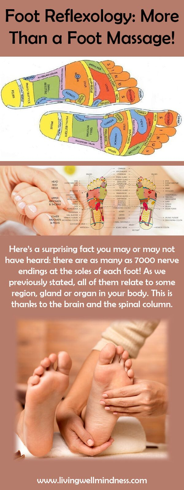316 best reflexology images on pinterest massage acupuncture foot reflexology more than a foot massage living wellmindness pooptronica Image collections
