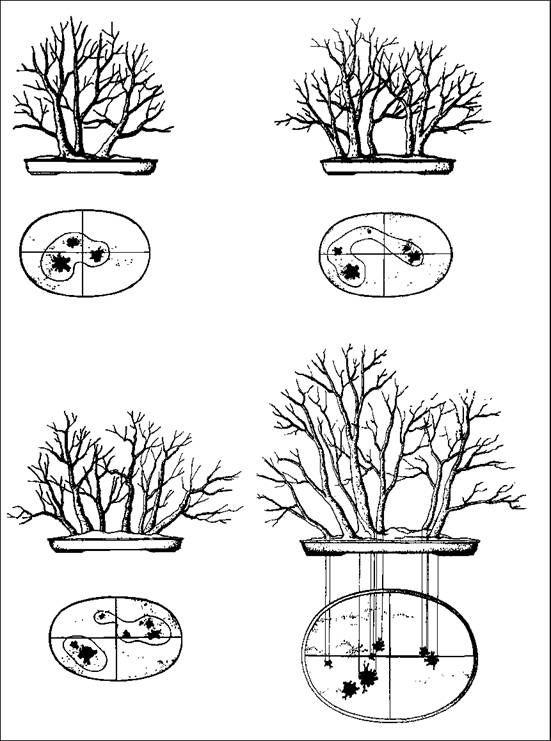 ~ Arrangement landscape bonsai ~