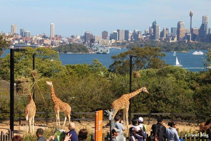 Taronga Zoo, Sydney - A World Class Zoo