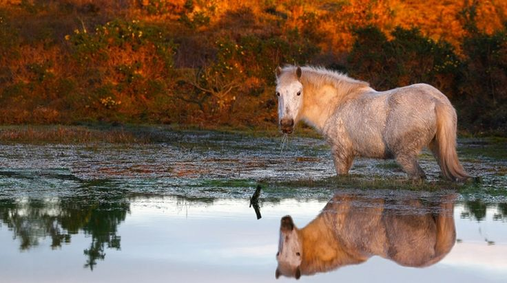 Autumn reflection at Bull Hill, Pilley