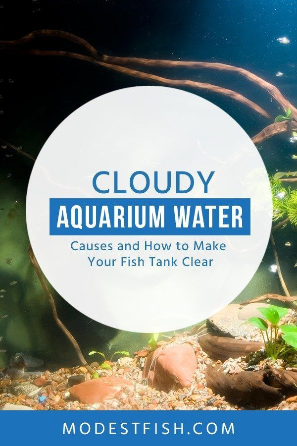 In This Guide We Ll Go Over The Different Kinds Of Cloudy Aquarium Water What Causes Them How You Can Fix It And Keep Fish Tank Fish Care Fish Tank Cleaning