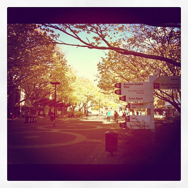 "@masseyuni's photo: ""Such a gorgeous Autumn day in the Manawatu!"""