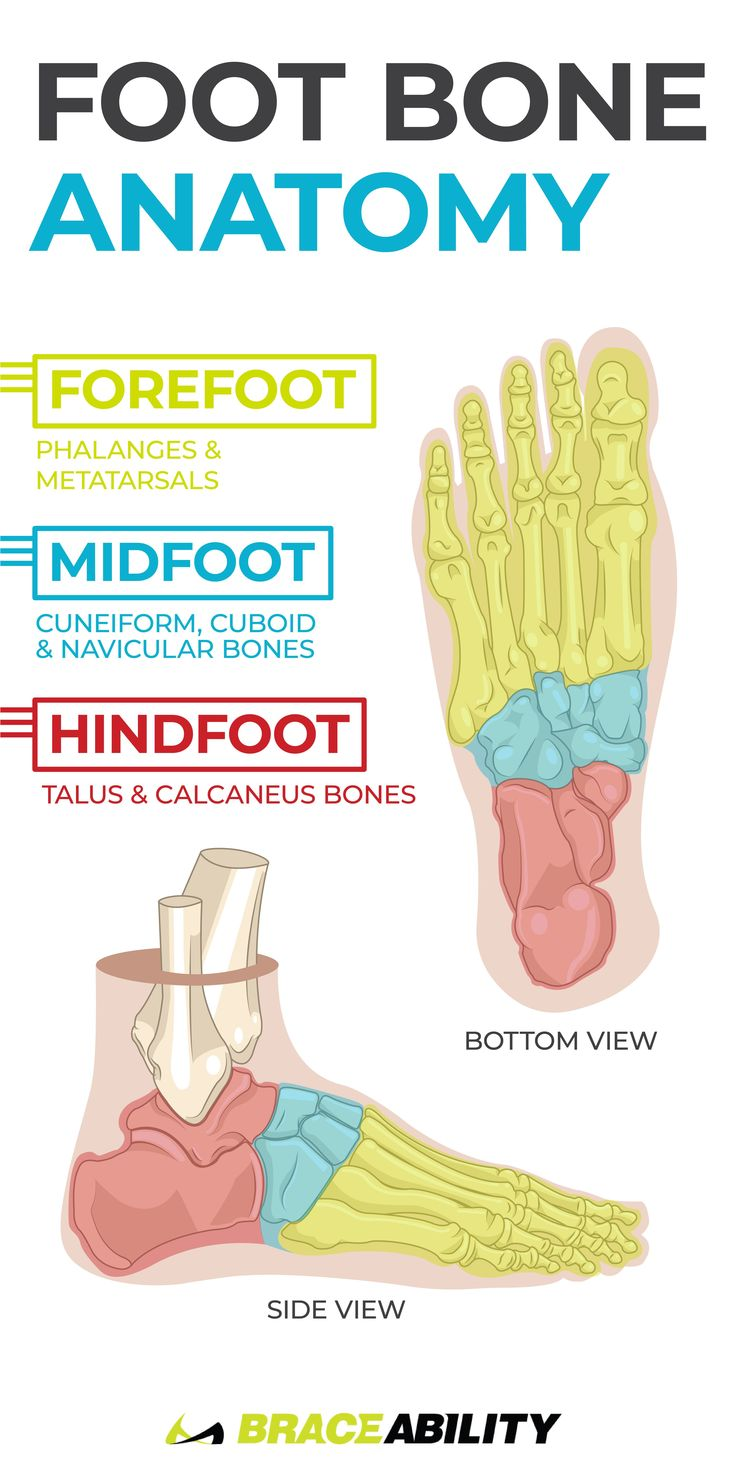 Perfect Anatomy Of The Bottom Of The Foot Gallery - Physiology Of ...