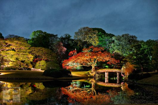 Perfect evening at Rikugien Garden in Tokyo ##timfranklinphotography ##tokyot...