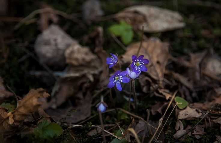https://flic.kr/p/DE8C3z | Flowers in Karkali Nature Park