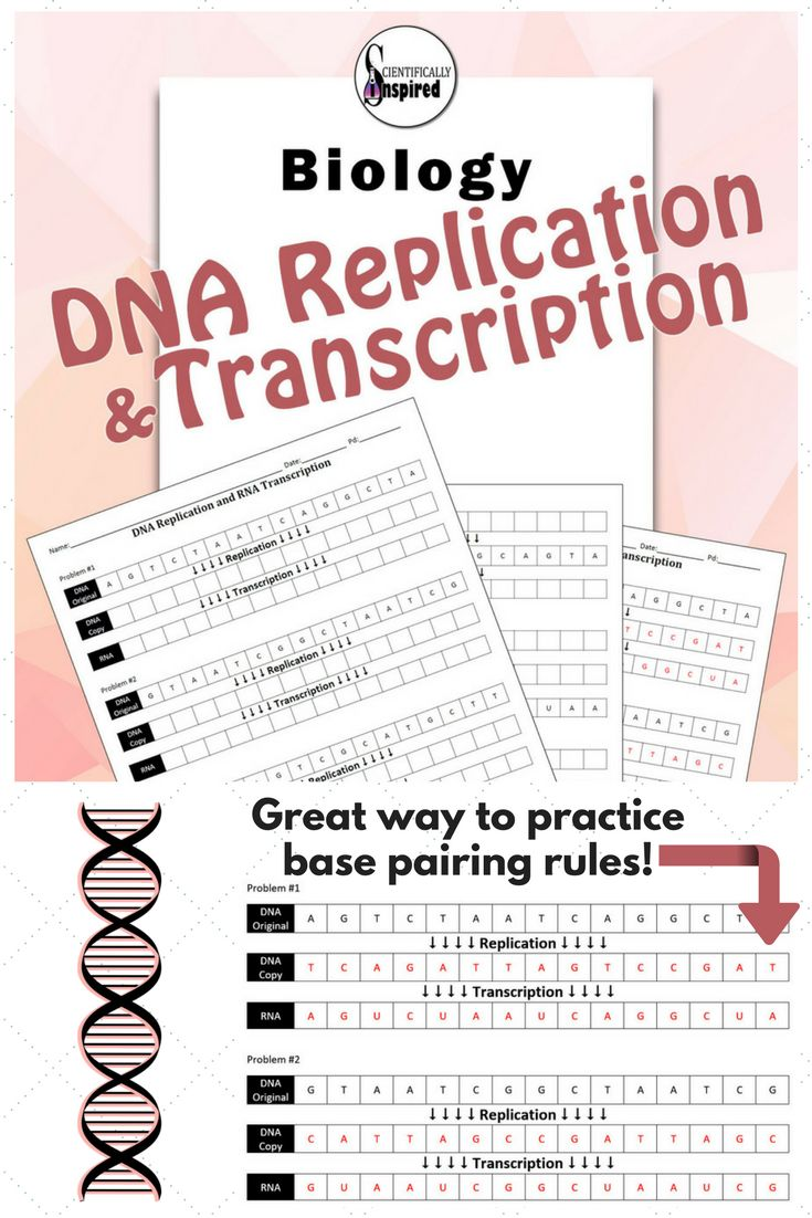 Dna lesson for high school