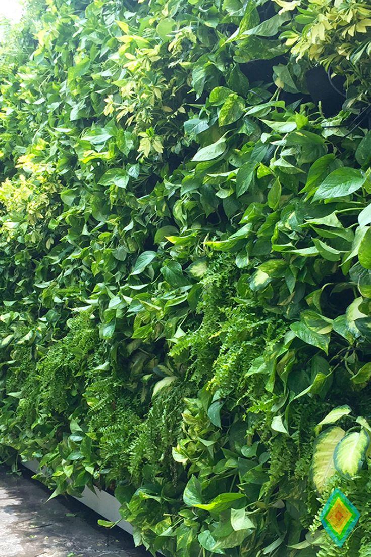 11 best jardines verticales naturales huichol images on pinterest gutter garden and vertical - Jardin verticale ...