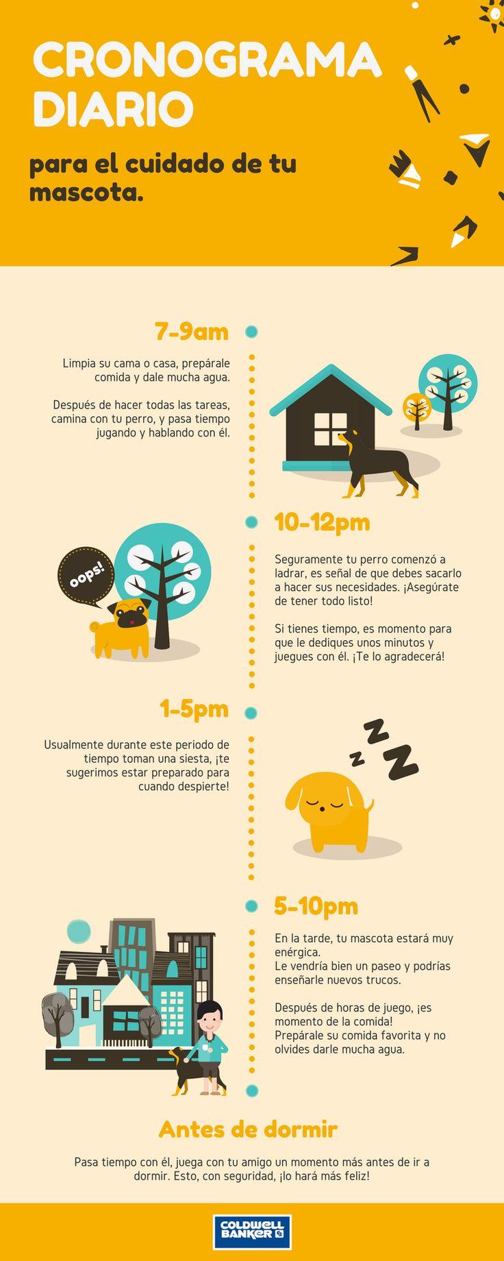 Coldwell Banker te da algunos consejos para que tu mascota y tu vivan felices. #lainmobiliariaazul #cbcolombia #adoptanocompres