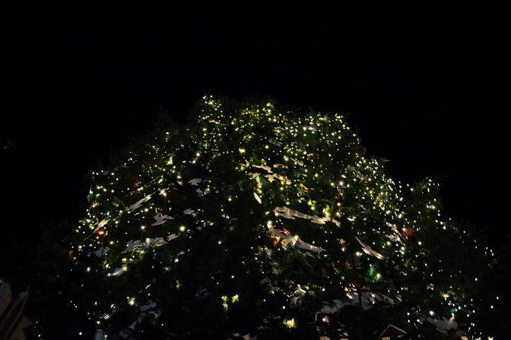 Christmas Tree in Kiev | by Anastasia Harach