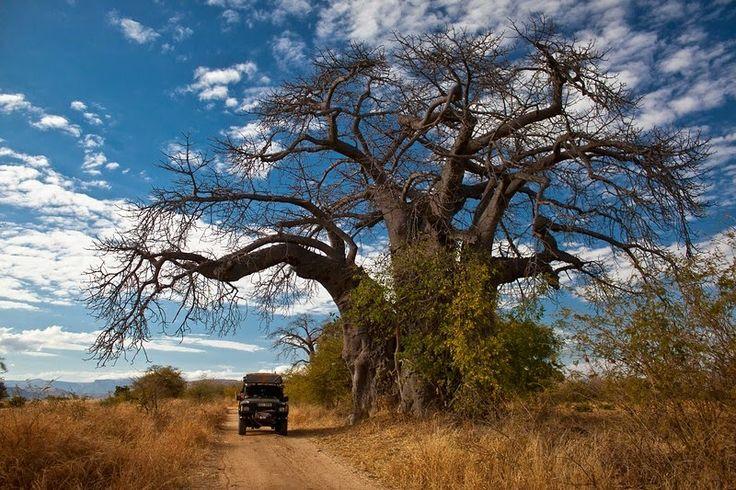Zimbabwe's Matopos Nat'l Park - GoNOMAD Travel