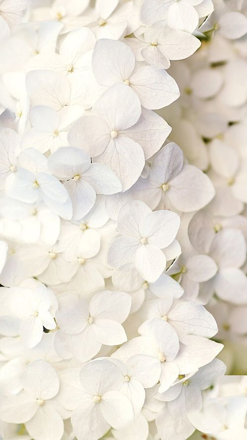 Best 25  White iphone background ideas only on Pinterest ...