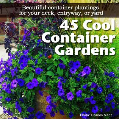 45 Cool Container Gardens For Your Deck, Entryway or Yard