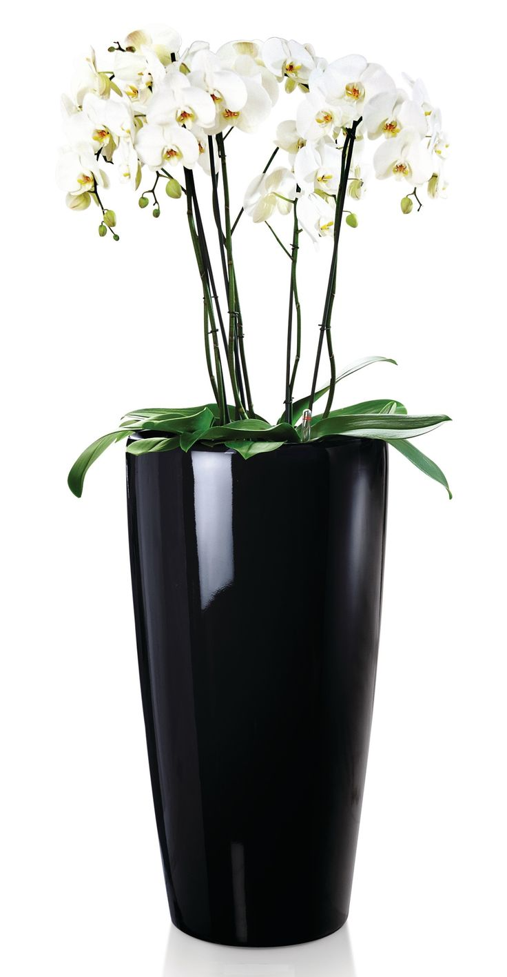 Correze comtemporary sleek black planter with orchid display