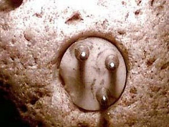 Why would the three-pronged plug be embedded in a rock?   What purpose would such an object serve? Another mystery related to the stone of heaven is that this artifact is always found in soil layers dating to at least 12000 BC. The stone was certainly produced by an unknown, highly advanced civilization lost in time.