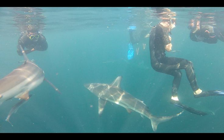 sharks, Durban, South Africa