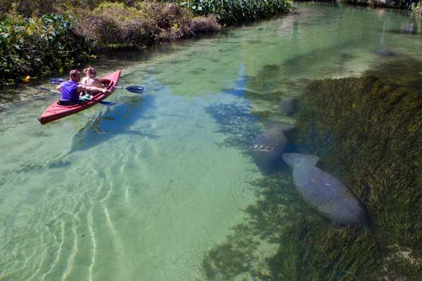 Weeki Wachee Kayak Rental and Canoe Rental - Weeki Wachee River|Florida Canoe Gallery..Going here one day