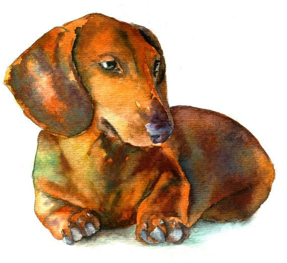 11 x 14 Watercolor Art Print  Red Dauchshund by ChristyStudios, $20.00