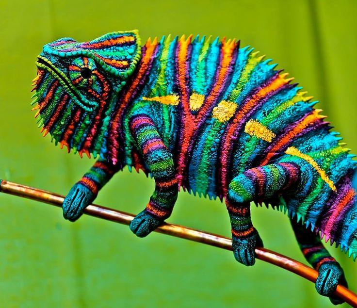 Chameleon | Blog with Carson