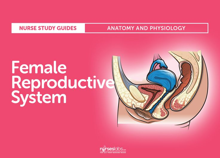 Featured- Female Reproductive System