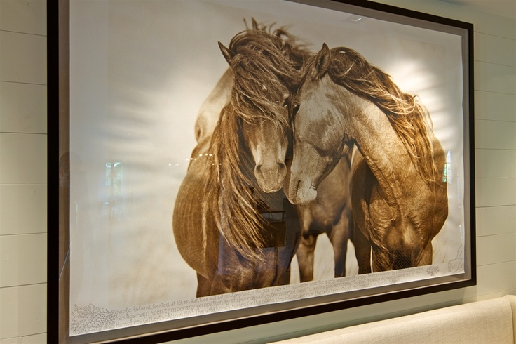 Sable Island horses - photographer Robert Dutesco - only a few ten thousand dollars.... My heart is broken.