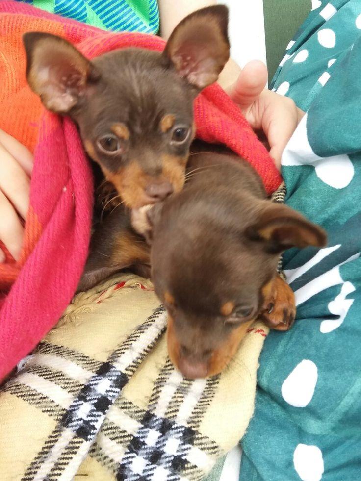 Sisterlove Bea&Vito