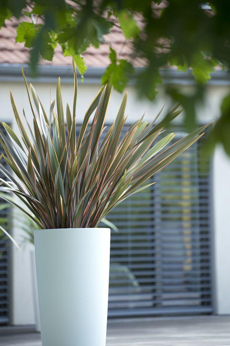 Pour un jardin épuré, privilégiez la légèreté. Optez pour des végétaux adaptés, à l'ambiance zen et apaisante.