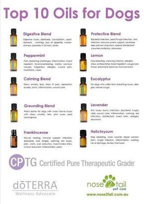 Image Result For Doterra For Dogs Essential Oils