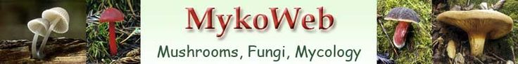 MykoWeb: Why you should not eat raw mushrooms. Alas, not even the white button mushrooms I like in salad.