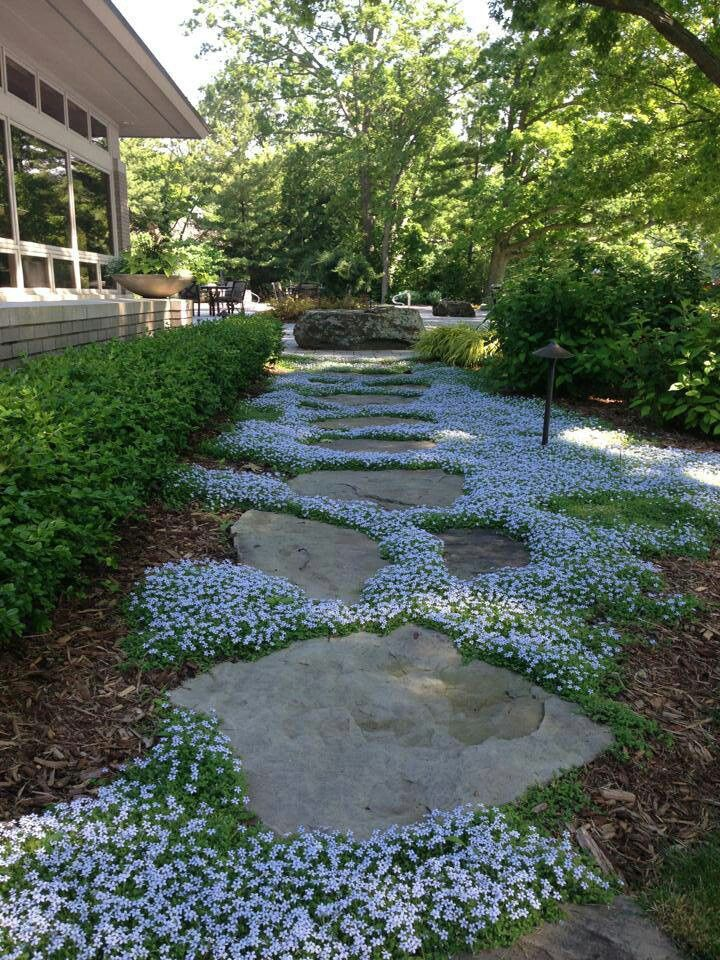 Enchanting Small Garden Landscape Ideas With Stepping Walk: I Love The Flowering Ground Cover Between These Stepping