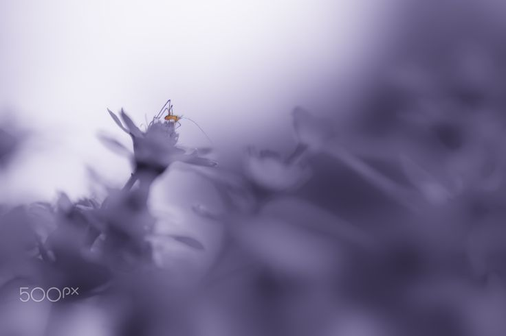 Spider In The Silence - spider