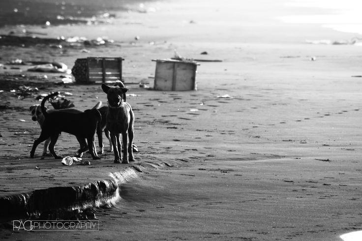 Guardian Dog  #pagiphotography, #pagi, #pagicreativeorganizer, #blackandwhite, #bw, #monochrome #creative, #inspirations