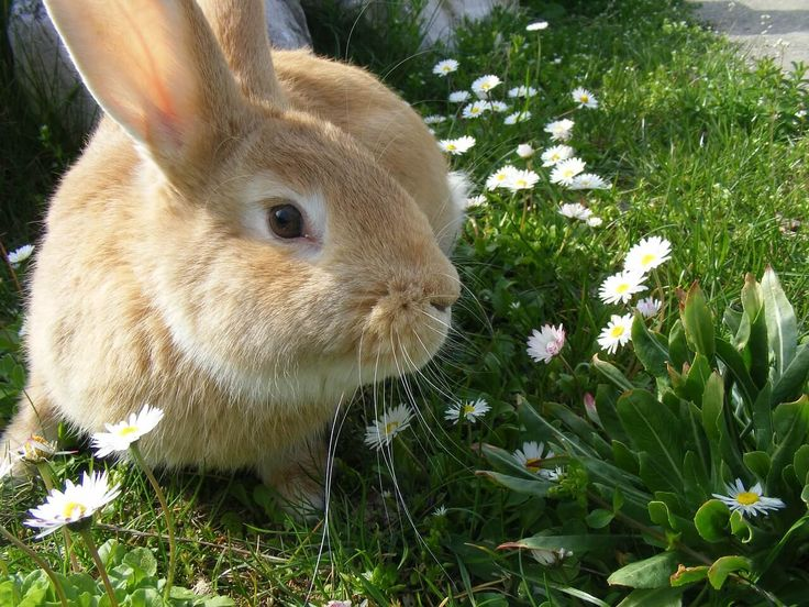 "The Netherlands Takes a HUGE Step for Animals in Labs! | PetaUK | ""In a historic move, the Netherlands is taking a major stand for animal – and human – rights! The Dutch government is working to end all animal experimentation in the country – and PETA scientists were asked to help."" Click to read and share the good news!"