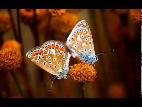 Mantra para atrair o verdadeiro amor, amizade e afeto na vida. - YouTube