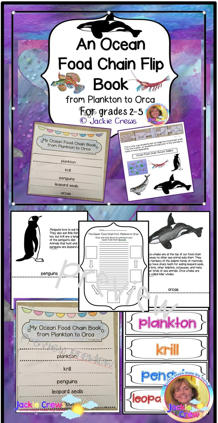 Bilingual dolphin counting card 6 clipart etc - His Is A Six Page Ocean Flip Book That Explains The Food Chain Progression From Plankton