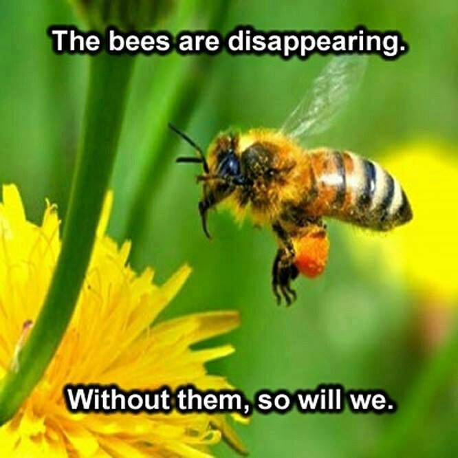 """""""If the bee disappeared off the surface of the globe then man would only have four years of life left. No more bees, no more pollination, no more plants, no more animals, no more man."""" — Albert Einstein"""