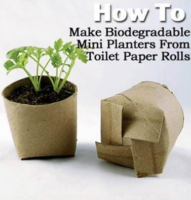 toilet paper roll planter More