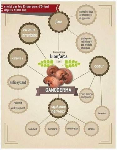 qqs bienfaits du ganoderma lucidium entre autres....