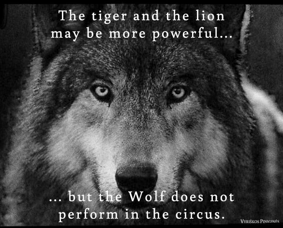 The tiger and the lion may be more powerful...but the Wolf does not poerform in the circus | Quotes