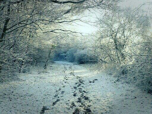 Snow ever again