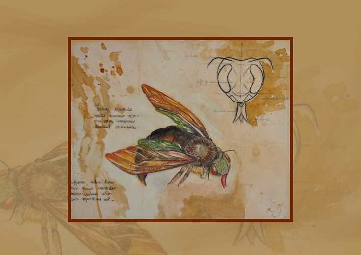 Liza Visser#Colour pencil and coffee stained bee drawing