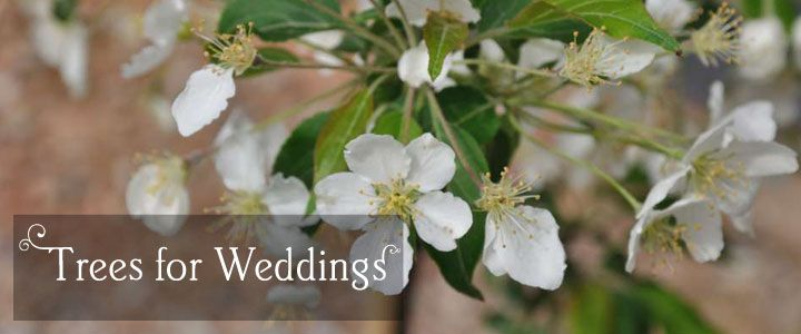 Plant a tree on your wedding day - http://www.tree2mydoor.com/special-occasions/wedding-presents/wedding-trees.html#products