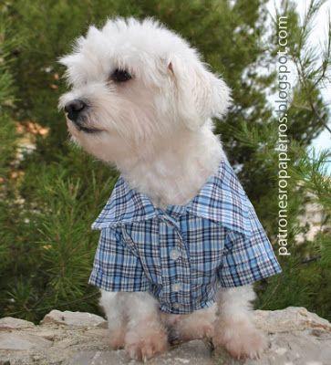 Patrones de camisa para perro   Patrones de ropa para perros