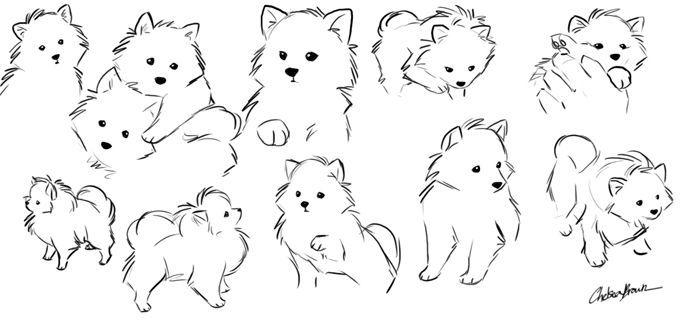 Pomeranian: Concept Sketches by ~spiritwolf77 on deviantART ...