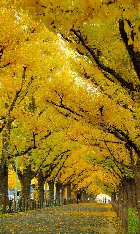 Meiji-jingu Gaien, Tokyo, Japan (by shinichiro* on Flickr)