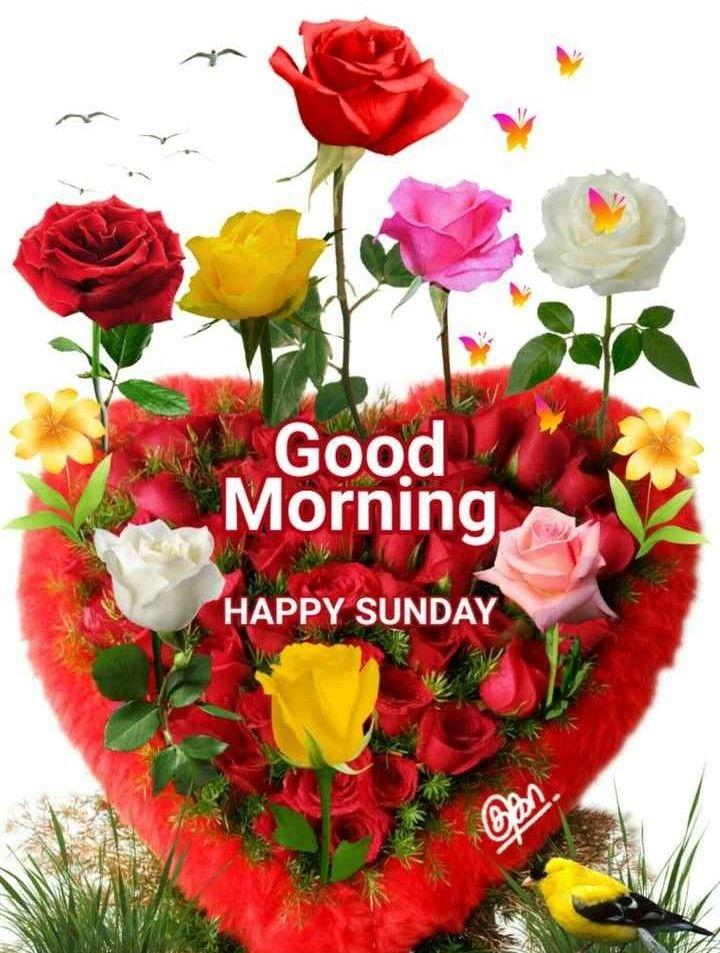Pin By Archana Sahoo On Good Morning Good Morning Happy Sunday Sunday Greetings Good Morning Flowers Flower wallpaper good morning