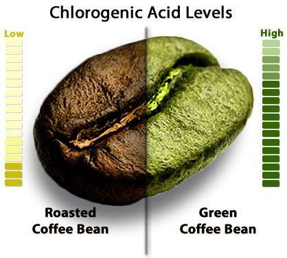 Chlorogenic acid GREEN COFFEE
