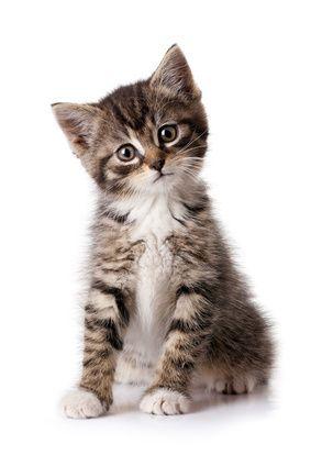 Votre chat a fait pipi sur la moquette ? Pas de panique ! Il existe une solution pour nettoyer facilement la tache et éliminer l'odeur de pipi.