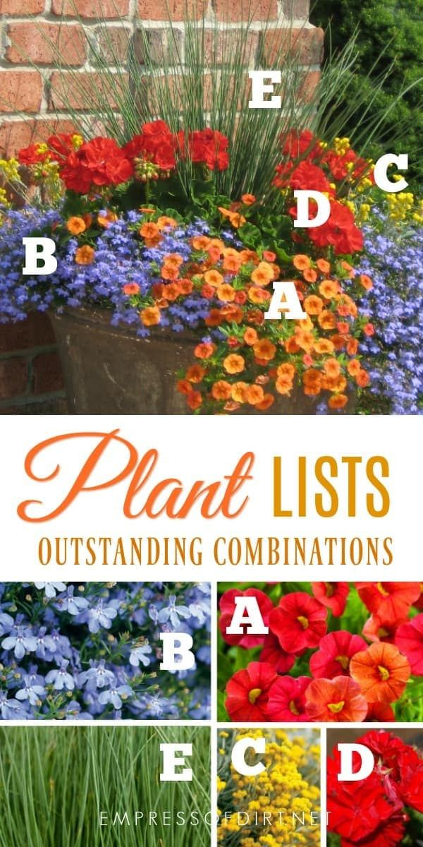Plant lists for beautiful patio containers. Image by Proven Winners.