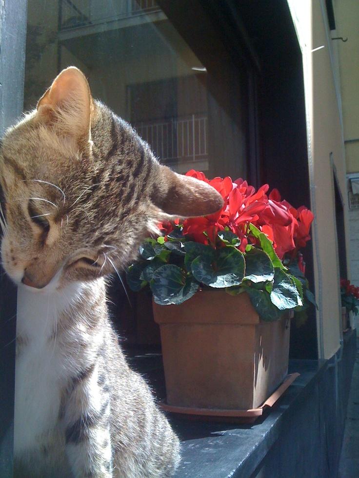Zoa's Kitten