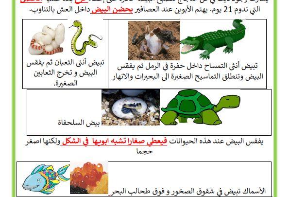 السلسلة الغذائية للحيوانات